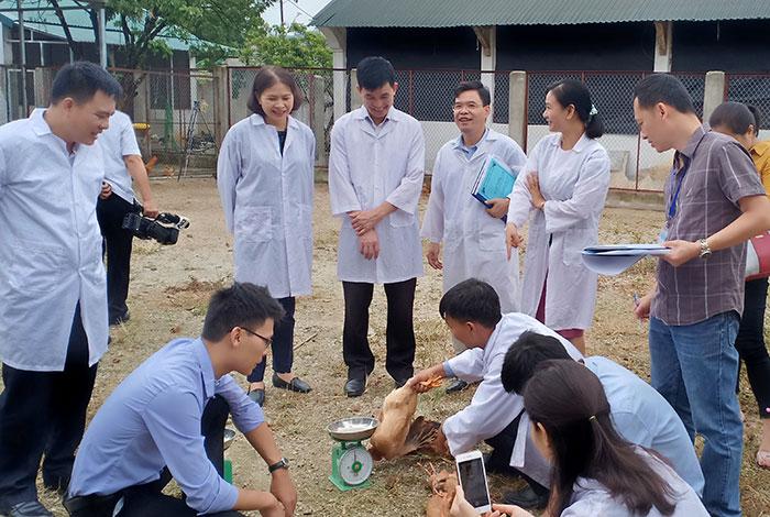 Đánh giá mô hình nuôi gà J- Dabaco trên đệm lót sinh học