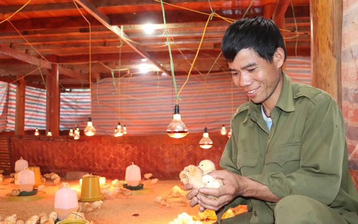 HTX Dịch vụ NLN - XD Quang Vinh: Tiên phong trong liên kết sản xuất